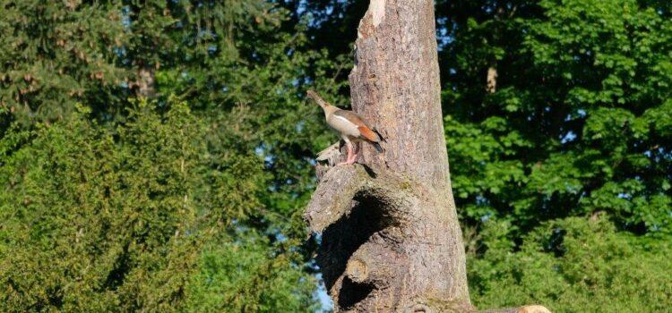 Vogelschutz auf Gut Mydlinghoven